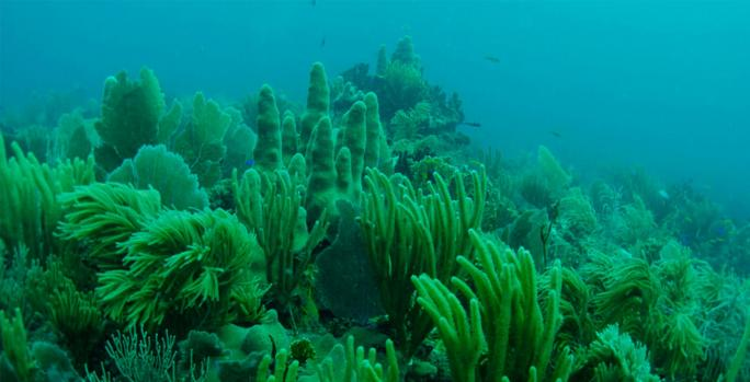 Marine Conservation - Just a Drop in The Ocean